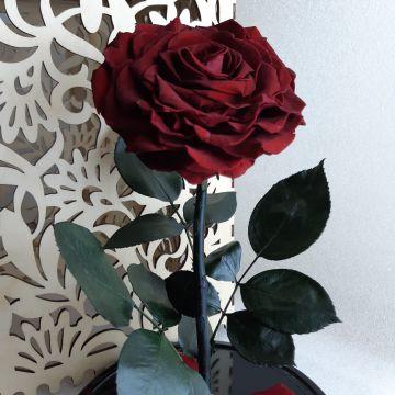 """Роза в колбе XL """"Rouge"""""""
