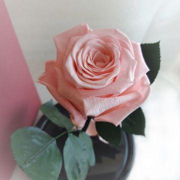 "Роза в колбе ""Pink"""