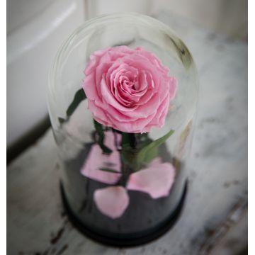 """Роза Люкс """"Pink"""""""