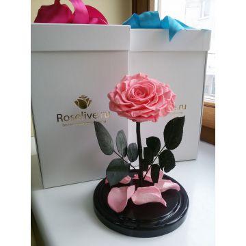 """Роза L """"Pink"""""""