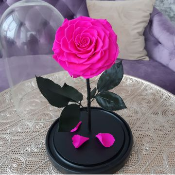 """Роза L """"Moonjet"""""""