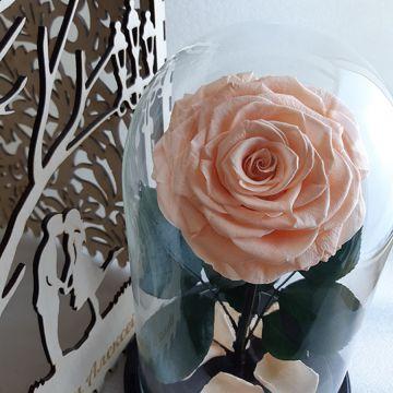 """Роза L """"Chloe"""""""