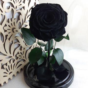 "Роза в колбе King ""Black"""