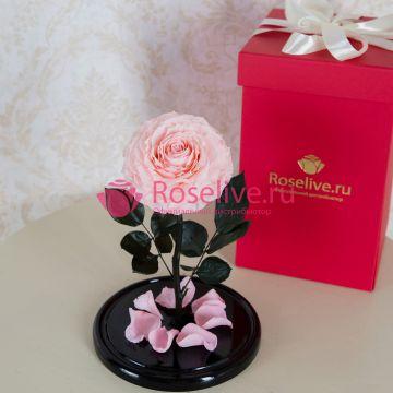 """Розы """"XL"""" с коробкой"""