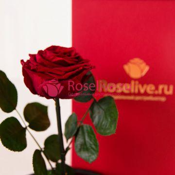 """Роза в колбе """"Rouge"""""""
