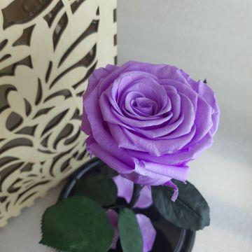 "Роза в колбе ""Princess"""