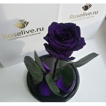 "Роза в колбе ""Deep Purple"""
