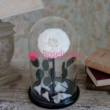 """Роза в колбе XL """"White"""