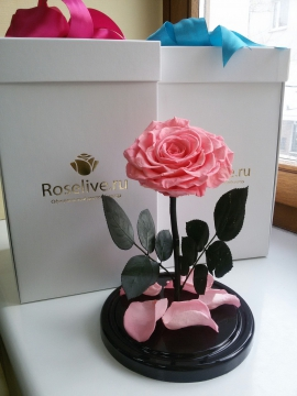 "Роза в колбе King ""Pink"""