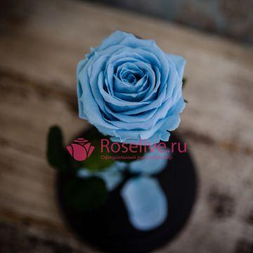"Роза в колбе ""SKY BLU"""