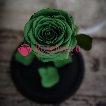 """Роза в колбе """"Oliver"""""""