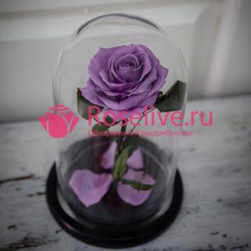 """Роза в колбе """"Sensitive"""""""