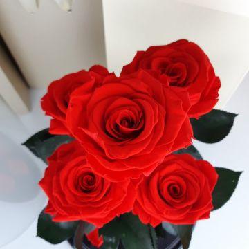 """Розы в колбе """"Five Red"""""""