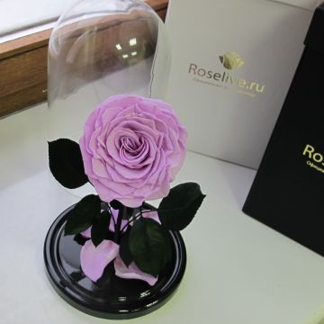"Роза в колбе VIP ""Princess"""