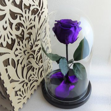 "Роза Люкс ""Фиолет"""