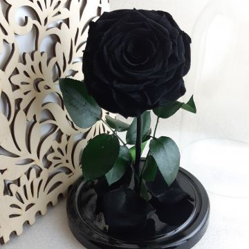 """Роза L """"Black"""""""