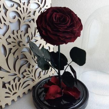 """Роза в колбе King """"Rouge"""""""