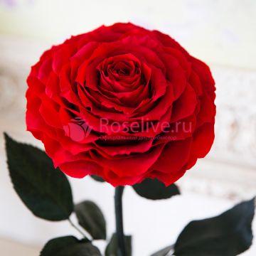 """Роза в колбе VIP """"Red"""""""