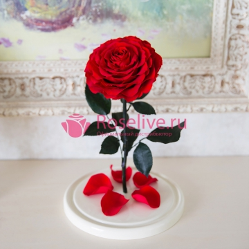 "Роза в колбе King ""Red"""