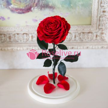 """Роза L""""Red"""""""