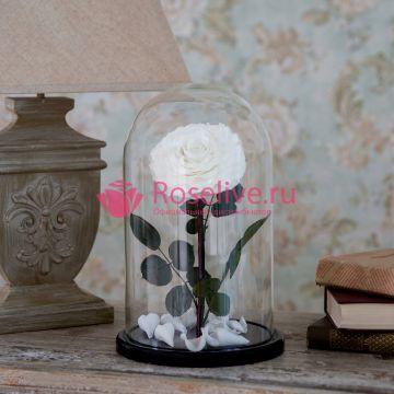 "Роза L ""White"""