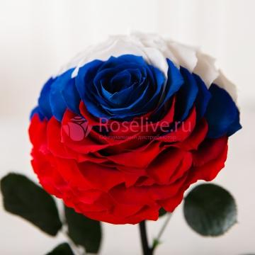 "Роза в колбе VIP  ""Триколор"""