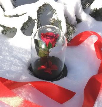 Роза в колбе MINI Red