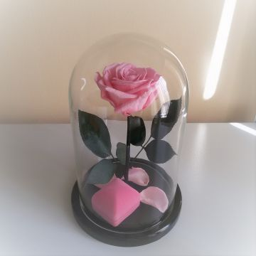 "Роза ""Pink"""