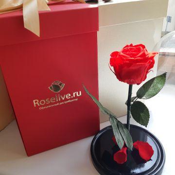 "Роза в колбе ""RED"""