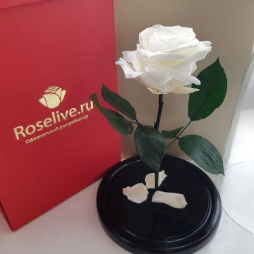 """Роза в колбе """"White"""""""