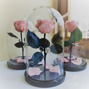 "Роза ""М"" Pink стандарт"