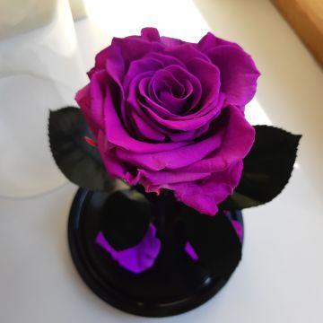 """Роза в колбе """"Фиолет"""""""