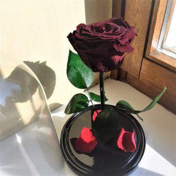 """Роза Люкс """"Rouge"""""""